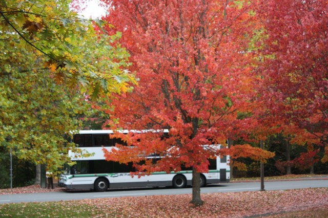 A bus driving on a road full of fall trees